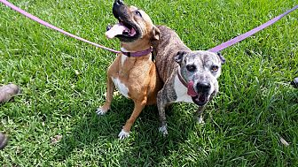 Adopt A Pet :: Cheri and Maude  - Simsbury, CT