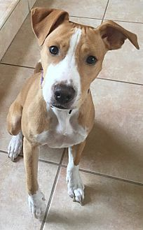 Adopt A Pet :: Completely adorable...  - Ft Myers Beach, FL
