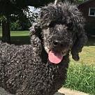Adopt A Pet :: Lokilani Belle