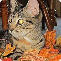 Adopt A Pet :: Sissy - Bunnell, FL