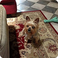 Adopt A Pet :: Lucy - Madison, WI