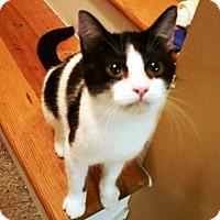 Adopt A Pet :: Brie - Putnam, CT
