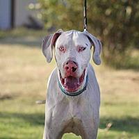 Adopt A Pet :: Tuff - Lubbock, TX