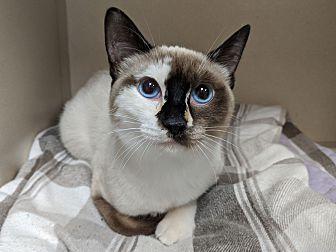 Adopt A Pet :: Cleo  - Laramie, WY