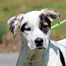 Adopt A Pet :: China B