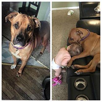 Adopt A Pet :: Lucy  - Anchorage, AK
