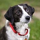 Adopt A Pet :: Emma (Has Application)