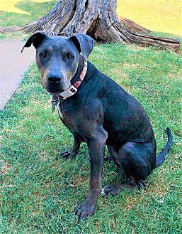 Adopt A Pet :: Willow  - Oklahoma City, OK