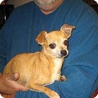 Adopt A Pet :: Flora - Greenville, RI