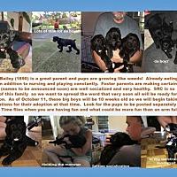 Adopt A Pet :: BAILEY (SRC#1890) in NC - Lenoir, NC