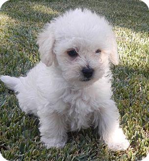 Dog Adoption Ontario Ca