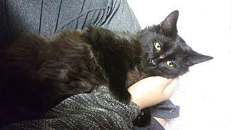Adopt A Pet :: Kaja  - Troy, MI