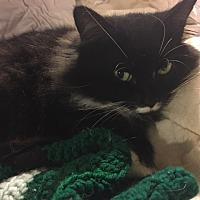 Adopt A Pet :: Holly - Delmont, PA