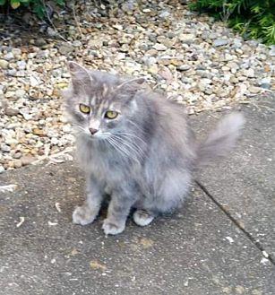 Adopt A Pet :: Luna  - Mt Vernon, IN