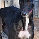 Adopt A Pet :: Sandrobber