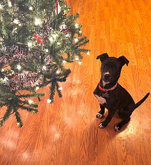 Adopt A Pet :: Kylie  - Oklahoma City, OK