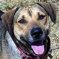 Adopt A Pet :: Sarah - Phoenix, AZ