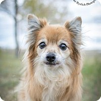 Adopt A Pet :: China - Cheyenne, WY