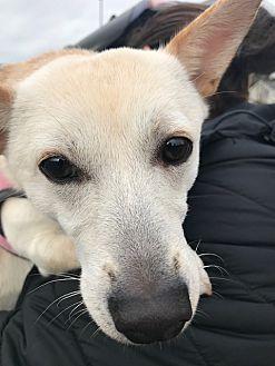 Adopt A Pet :: Dahlia  - Renton, WA
