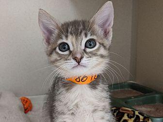 Adopt A Pet :: Tang  - Laramie, WY