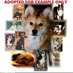Puppies For Sale In Akron Ohio Adoptapet Com