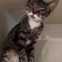 Adopt A Pet :: Caesar - Key Largo, FL