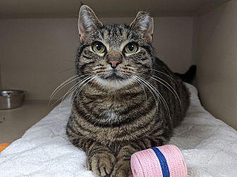 Adopt A Pet :: Holly  - Laramie, WY