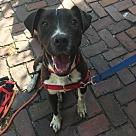 Adopt A Pet :: Everitt (Needs Foster)