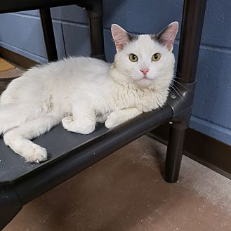 Adopt A Pet :: Bubby  - Wilmington, OH