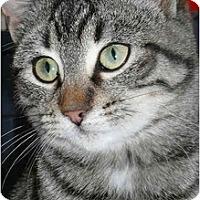 Adopt A Pet :: Chaplin - Strathmore, AB