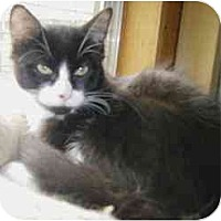Adopt A Pet :: Mickey Mantle - Strathmore, AB