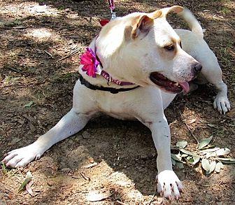 Adopt A Pet :: Toni  - Edisto Island, SC