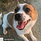 Adopt A Pet :: Doogie