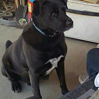 Adopt A Pet :: Tank - Byhalia, MS