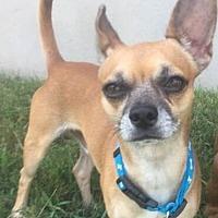 Adopt A Pet :: Topo Chico - Austin, TX