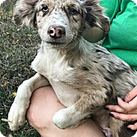 Adopt A Pet :: Hobart - Starkville, MS