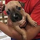 Adopt A Pet :: Butterbean's Bailey