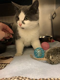 Adopt A Pet :: Betty  - Moose Jaw, SK