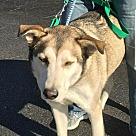 Adopt A Pet :: Duncan