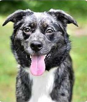 Adopt A Pet :: Zoe  - Mt Vernon, IN
