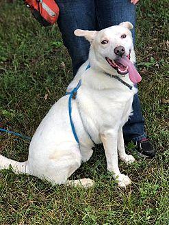 Adopt A Pet :: Jughead  - Clarksville, TN