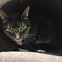 Adopt A Pet :: George - Chicago Heights, IL