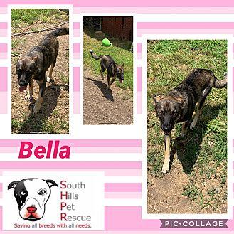 Adopt A Pet :: Bella  - South Park, PA