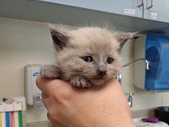 Adopt A Pet :: 19-0248  - Laramie, WY