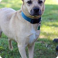 Adopt A Pet :: Cori - Waldorf, MD