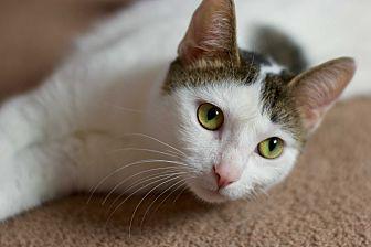 Adopt A Pet :: Ellie  - Troy, MI