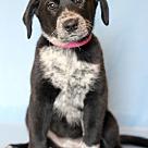 Adopt A Pet :: Hijiki