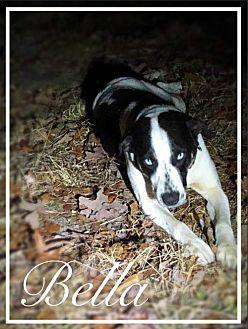 Adopt A Pet :: Bella  - Vass, NC