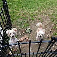 Adopt A Pet :: Lucy Ethel - SAN DIMAS, CA