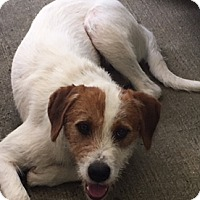 Adopt A Pet :: Pete - Newnan, GA